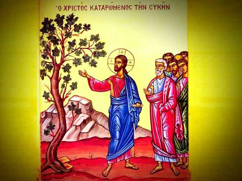 За что Христос рассердился на смоковницу?