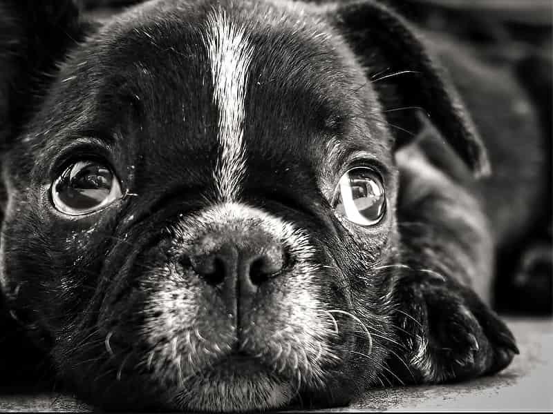 Церковь и собака - как православие относится к собаке?